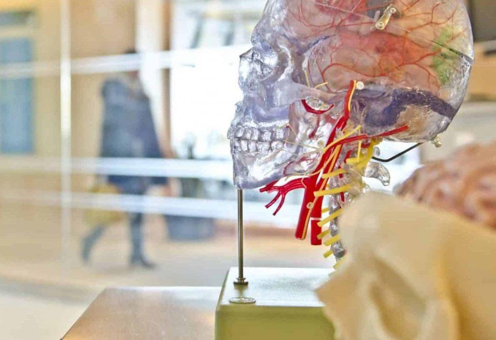 Neuroscience coaching change your brain